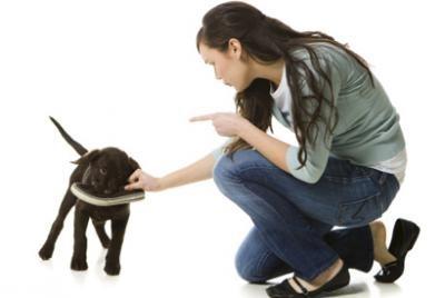 éduquer son chien