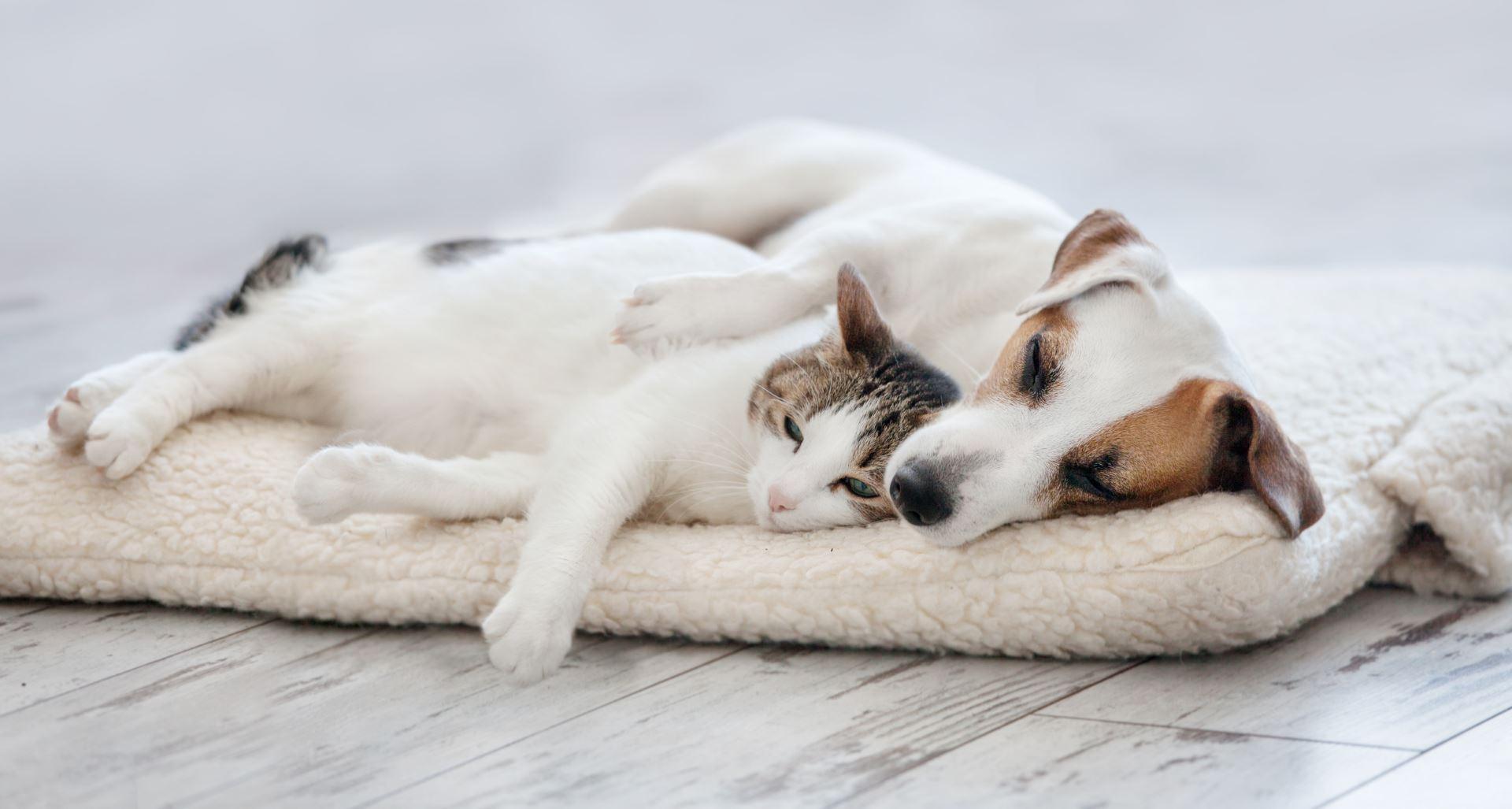 Cat And Dog Sleeping. Pets Sleeping Embracing