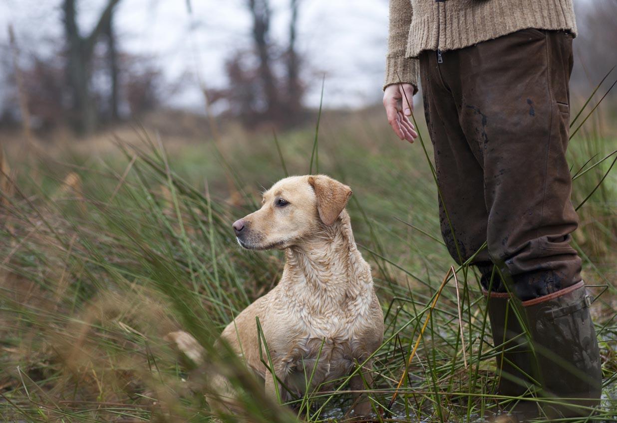 Chasseur avec un chien de chasse
