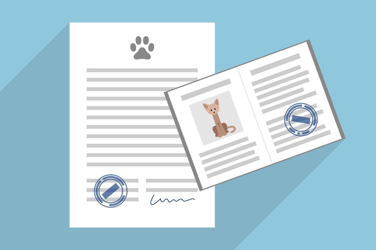illustration contrat d'assurance chat