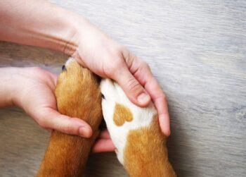 Assurance Animaux Pattes Chien